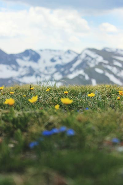 Green grass in front of mountain range